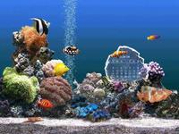 Fond D Ecran Aquarium Gratuit Fond Ecran Economiseur D Ecran Poisson Tropical