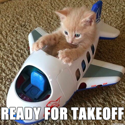 Idea by K Hannah on Cute Kittens cutest, Funny animal