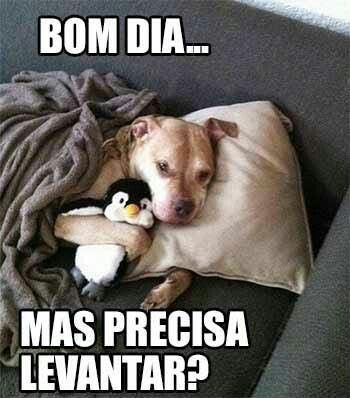Pin De Caixa Da Amora Em Bom Dia 03 Animais Bom Dia Humor Engracado