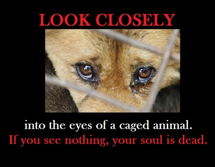 Animal Eyes Quotes Google Search Animals Animals Dogs Animal