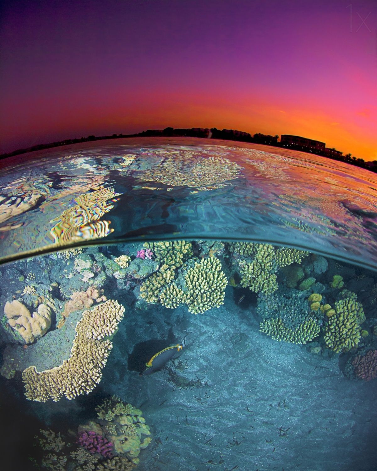 Dusk at the Red Sea Reef by Henry Jager