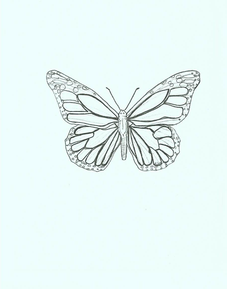 Butterfly Butterfly Drawing Butterfly Drawing Images Butterfly Clip Art [ 1152 x 904 Pixel ]