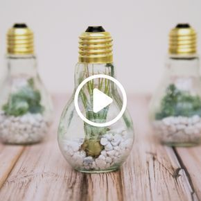 Turn Light Bulbs Into Terrariums wit this StepbyStep  I like it