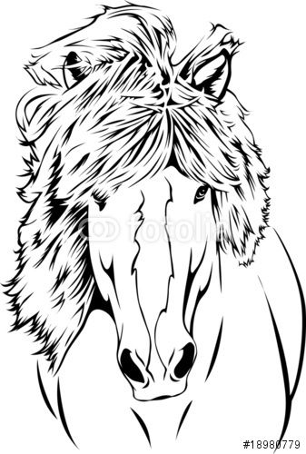 """Icelandic Horse - Portrait 02"""" Stock image and royalty-free vector ..."""
