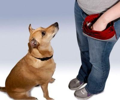 Professional German Shepherd Directory Premier Dog Treat Pouch
