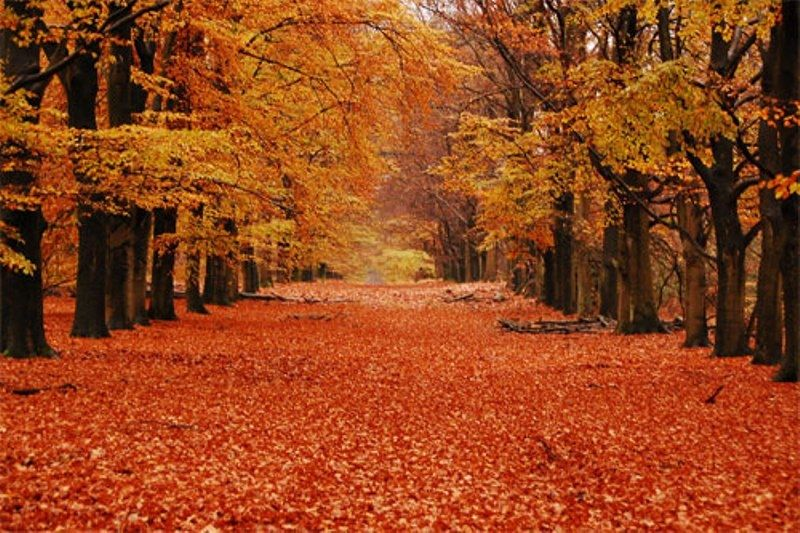GladsBuy Autumn Fallen Leaves 8 x 8 Computer Printed Photography Backdrop Nature Theme Background DT-12-43