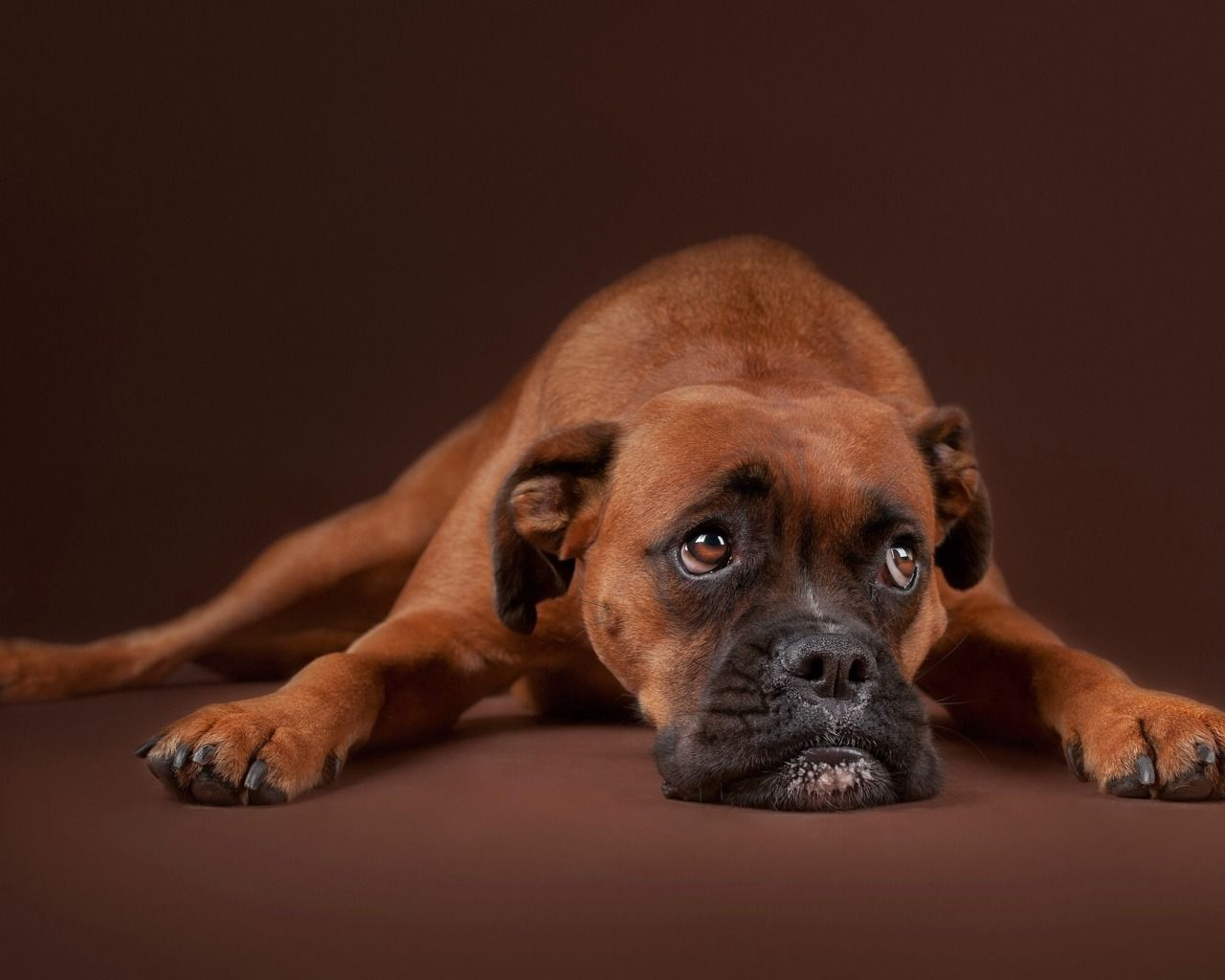 Обои грусть, Собака. Собаки foto 9