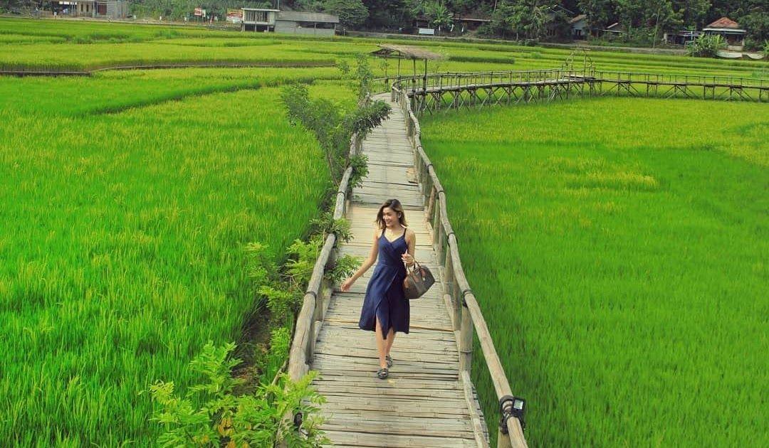 Terpopuler 30 Pemandangan Persawahan Explore Jogja Ephework Di Instagram Indahnya Pemandangan Download Menikmati Keindahan Pan Di 2020 Pemandangan Tours Pedesaan