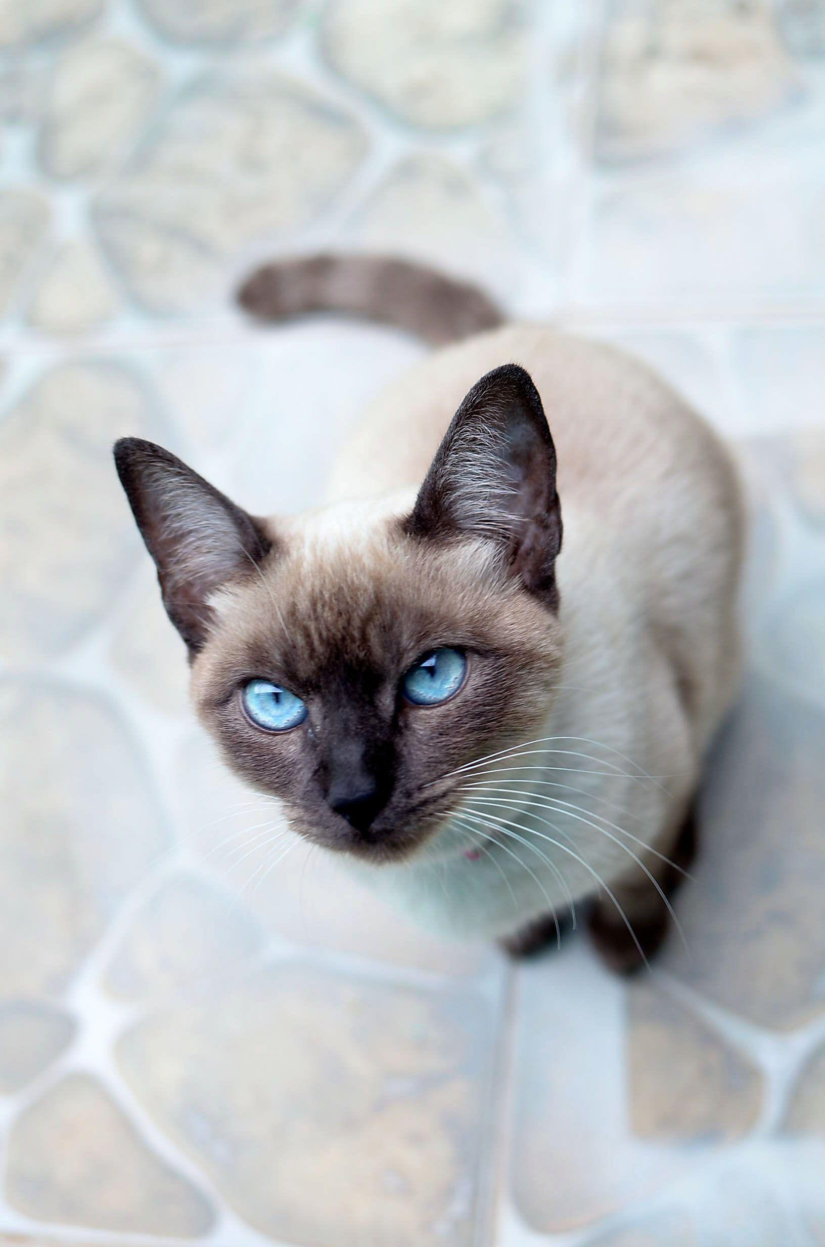 Gatita De Los Ojos Turquesa Gatinho E Outros Bichinhos Gatos
