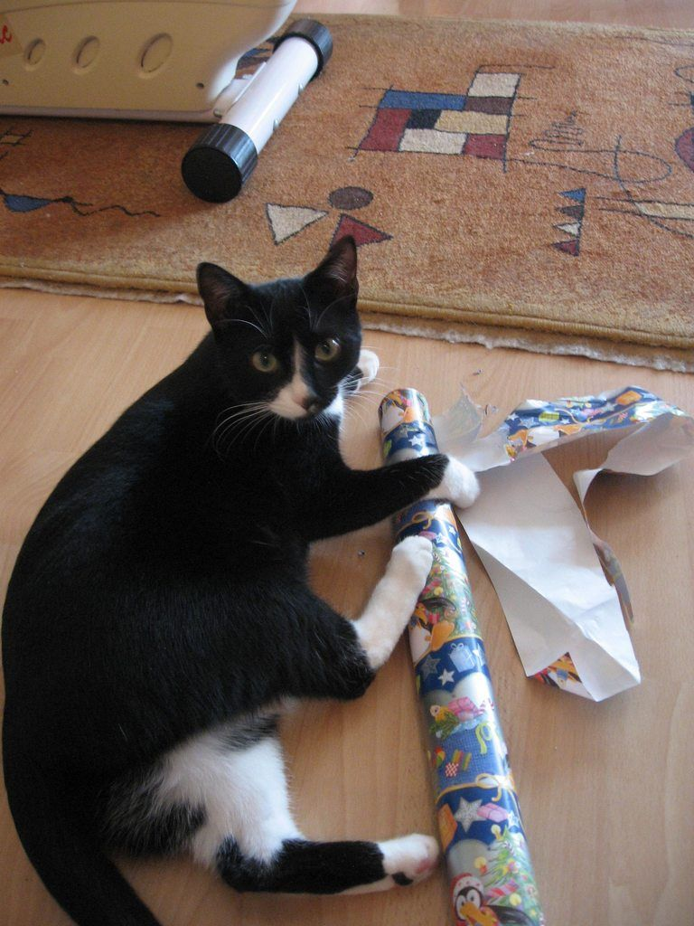 had a great help wrapping christmas gifts - How To Wrap A Cat For Christmas