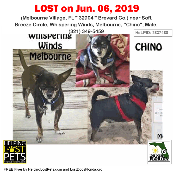 Lost Dog Have You Seen Chino Lostdog Chino Melbournevillage Soft Breeze Circle Whispering Winds Melbourne Chino Male Losing A Dog Dogs Therapy Dogs