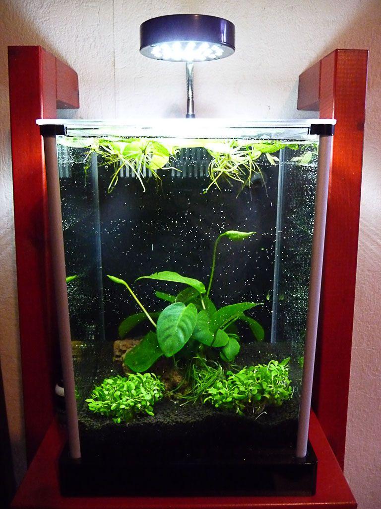 mini aquarium fluval spec l envie d aquarium et de crevettes me reprend j ai trouv un nouveau. Black Bedroom Furniture Sets. Home Design Ideas