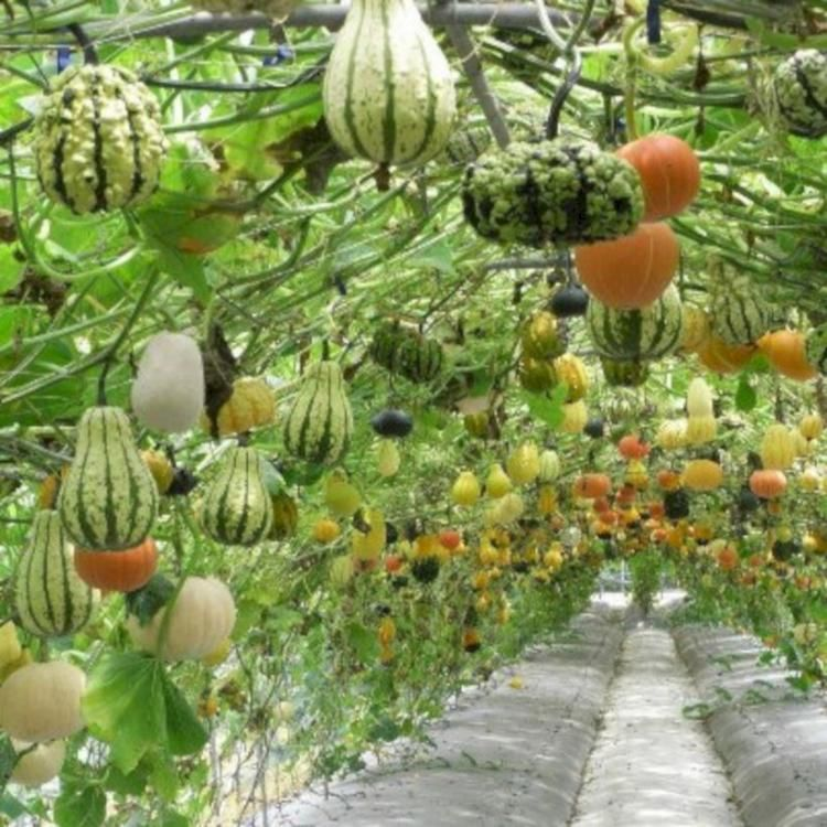 40+ DIY Vegetable Garden Ideas is part of Big garden DIY - For people that have little if any outdoors, hydroponics is a superb approach to expand natural herbs and veggies inside  Expanding in numerous distinctive shapes, colours, and dimensions, radishes are a favorite plant around the world  You can't expand a great yard with out outstanding soil  You might utilize big bags or pots for this …