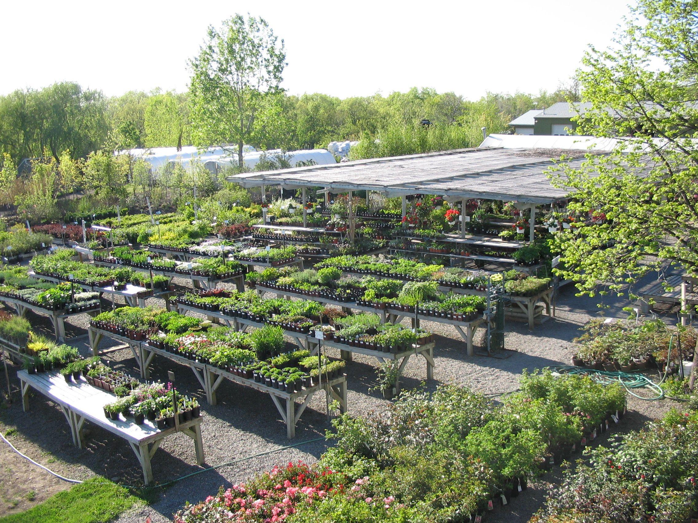 C Garden Center Perennials Tables
