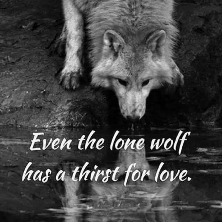 Even The Lone Wolf Has A Thirst For Love.