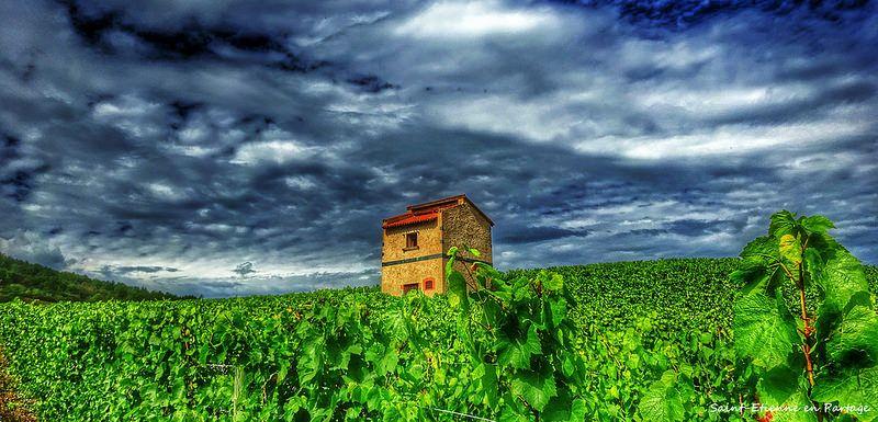 Ancienne loge de vigne Champdieu - Loire - Forez