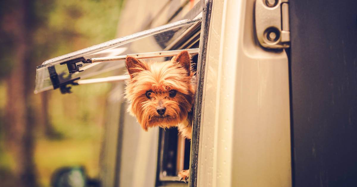 Camping with Dogs: RV Having Fun Yet?