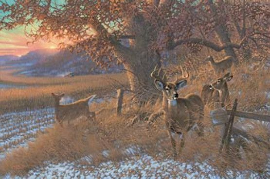 Michael Sieve Down From The Ridge Deer S N Canvas Hunting Art Wildlife Prints Nature Paintings