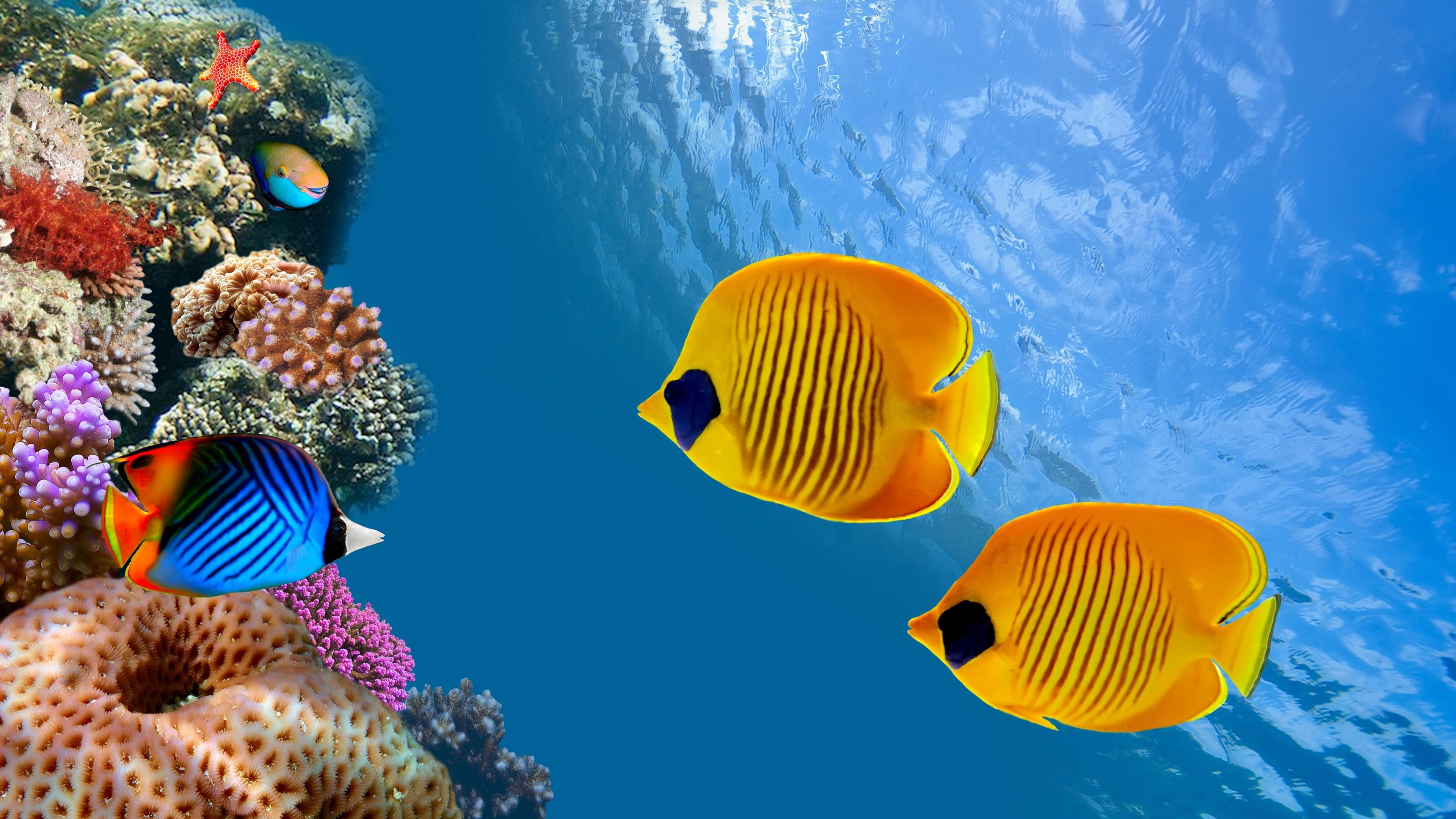 Underwater Sea Fish Underwater 4k Ultra Hd Wallpaper 4k