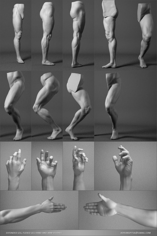 ArtStation - Digital Sculpting Human Anatomy Studies, Adrian Spitsa ...