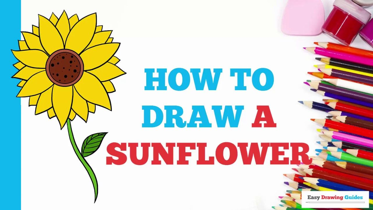 Learn how to draw a sunflower easy stepbystep drawing tutorial