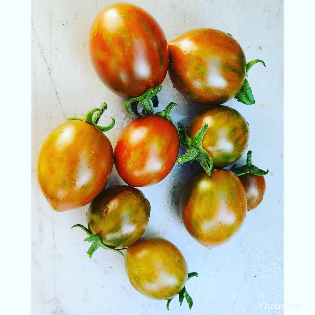 Sprinkles Cherry Tomatoes
