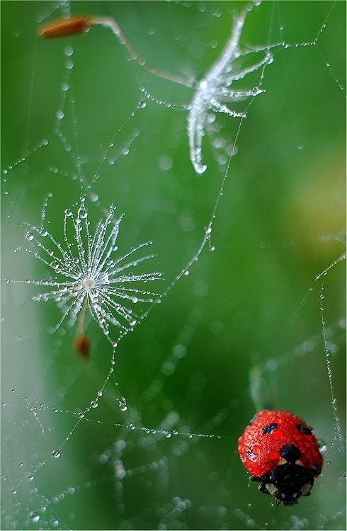 Magda Wasiczek's lady bird, delicate web