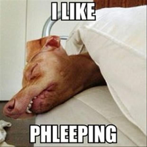 Tuna Phteven Is The Funniest Dog On The Internet 20 Pics