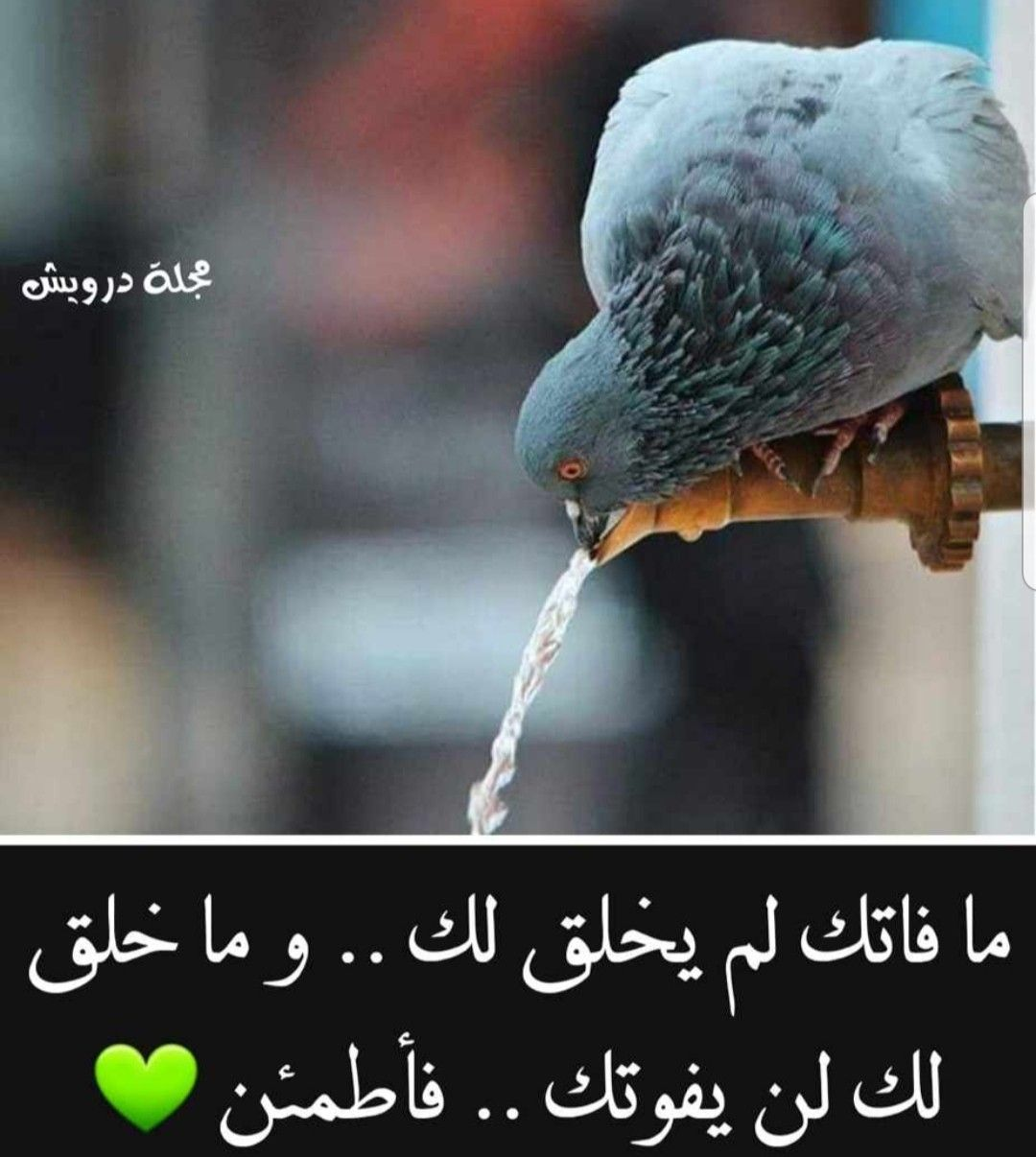 Pin By Lolo On روحانيات Allah Animals Islam