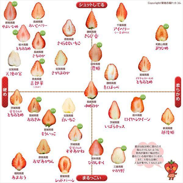 食べ比べしたくなっちゃう 築地市場が作った28種類のイチゴの品種別