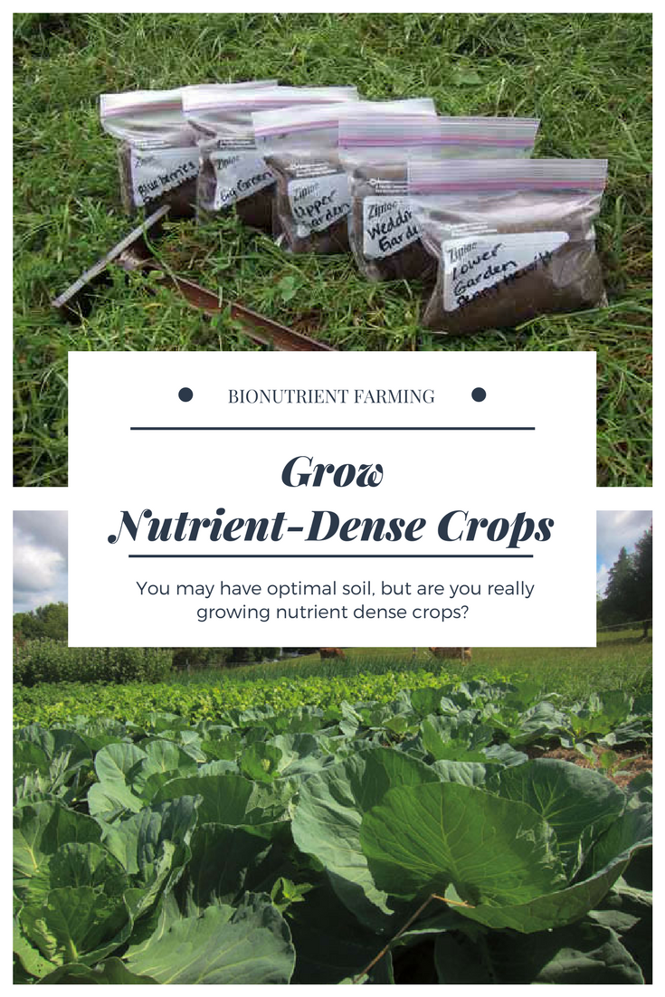 Remineralize Soil to Grow Nutrient Dense Crops Farm and