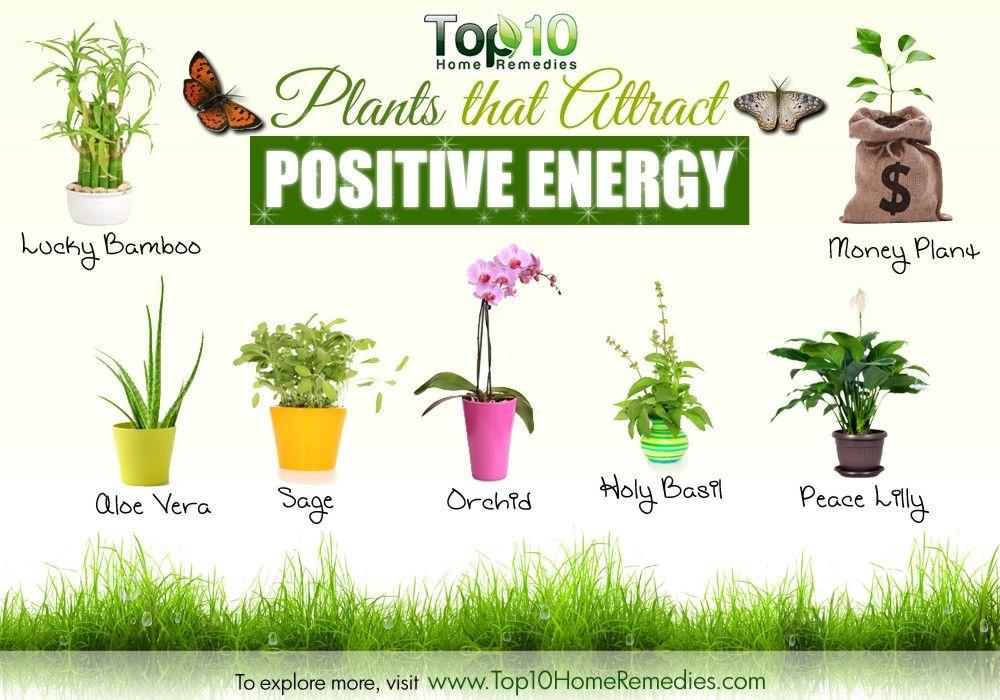 10 plants that attract positive energy feng shui pinterest plantes int rieur et potager. Black Bedroom Furniture Sets. Home Design Ideas