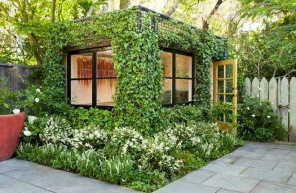 immergrüne kletterpflanzen - sie dienen zum sichtschutz, zur, Gartenbeit