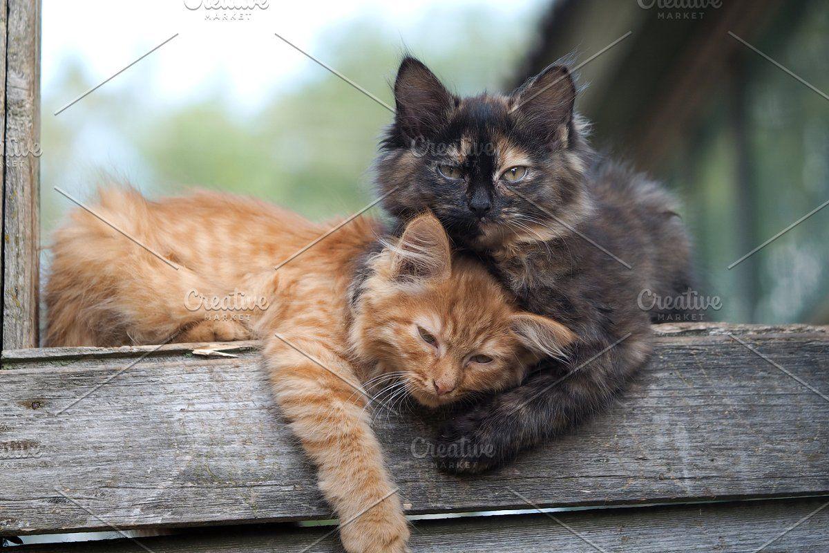 Cute Kittens In 2020 Kittens Cutest Kittens Kitten