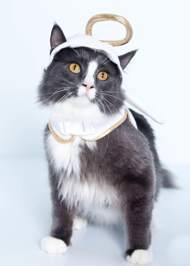 Petdetail Petfinder Cat Adoption Animals Beautiful Cute Cats