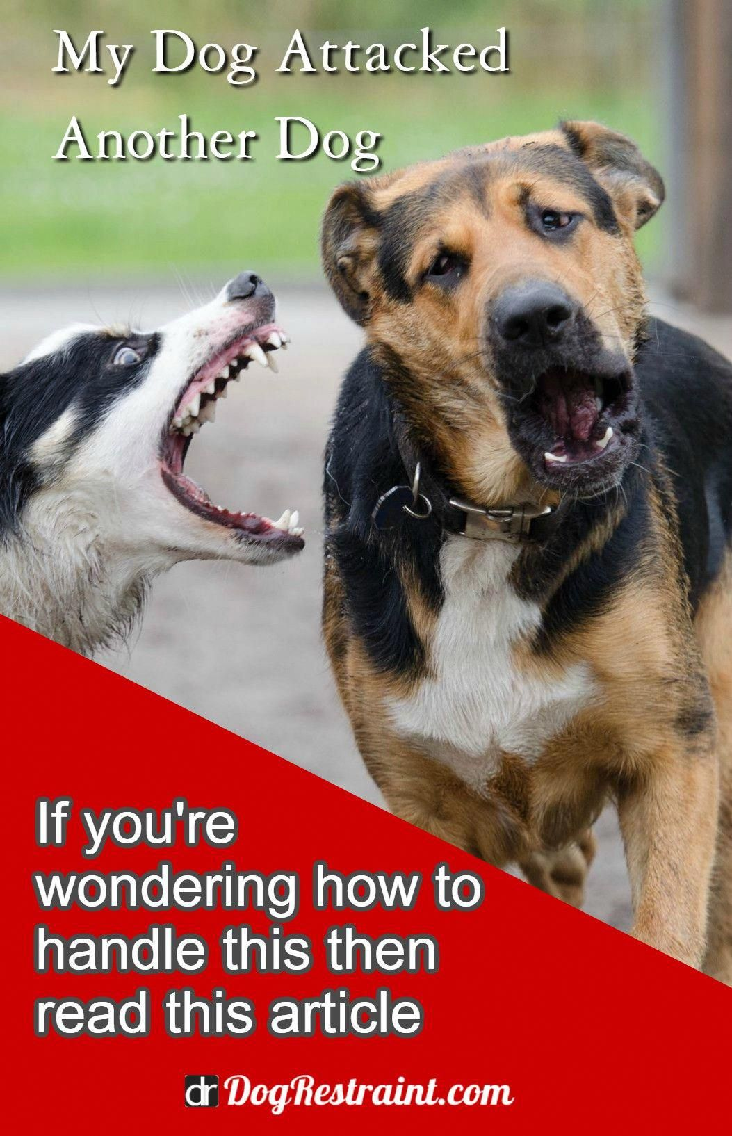 Calm Established How To Stop Dog Aggression Private Access Dog