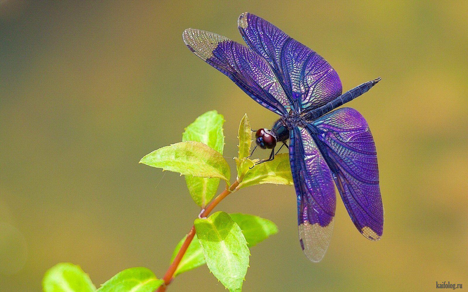 Красивые фотографии природы (55 фото) | Insect wings ...