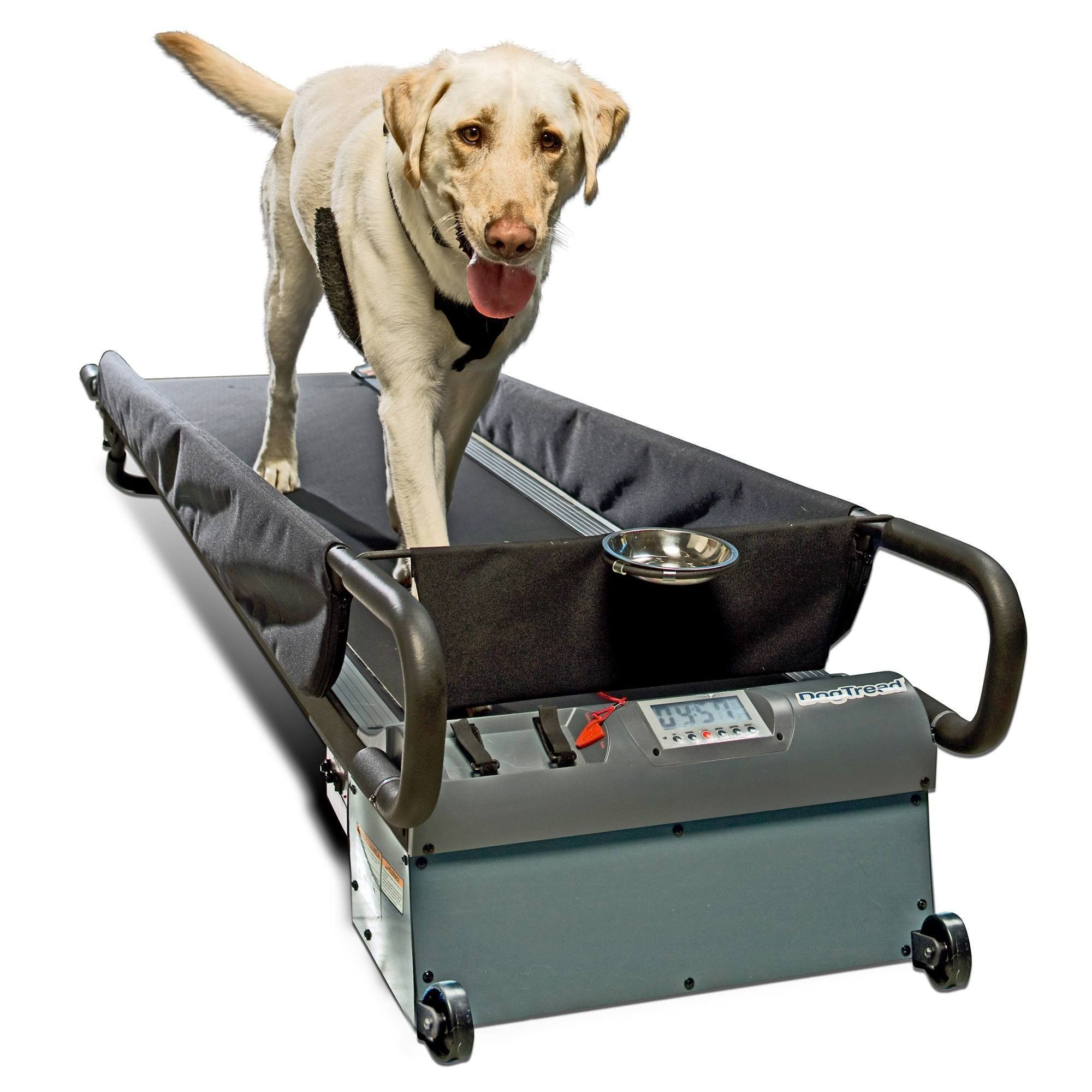 This Large Size Dog Treadmill By Dog Tread Is Perfect For Dogs U