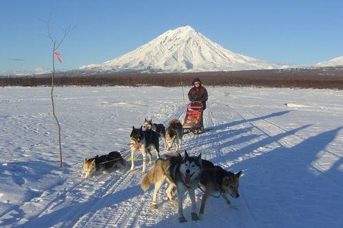 I want to go dog sledding in Alaska!
