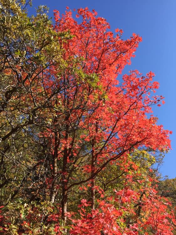 Farmington Canyon Trail - UTAH - 10012019