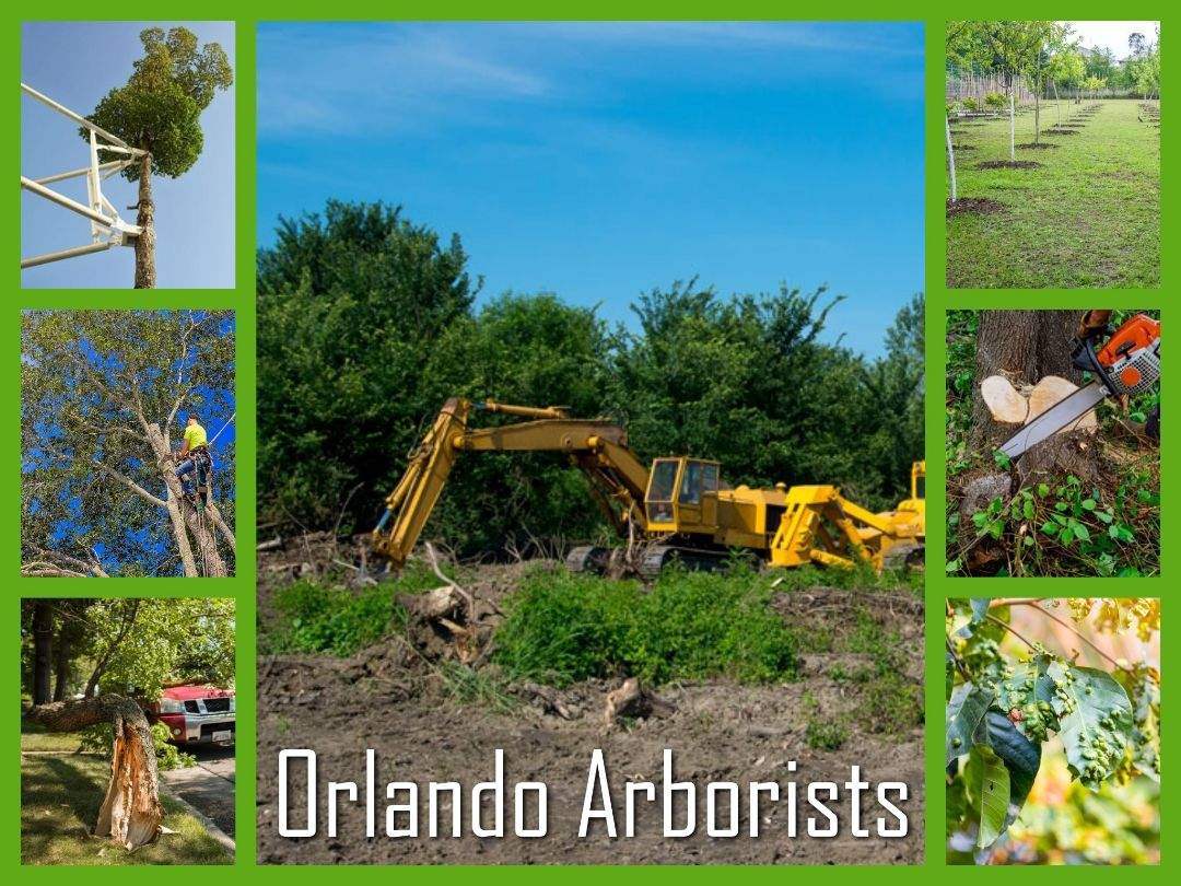 If you want to plant a tree in Orlando, be sure to reach