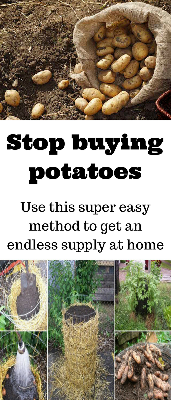 Stop buying potatoes. Use this super easy method to get an endless ...