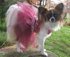 Buffy Papillon Dog Ballerina Outfit