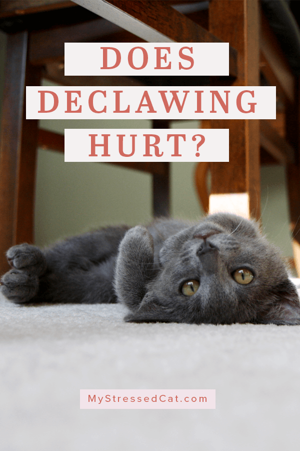 Stop Declawing Cats And Do This Instead (With images