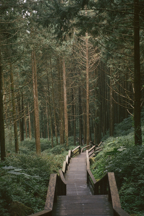Enigmatic Forest [via/more] By Huen *