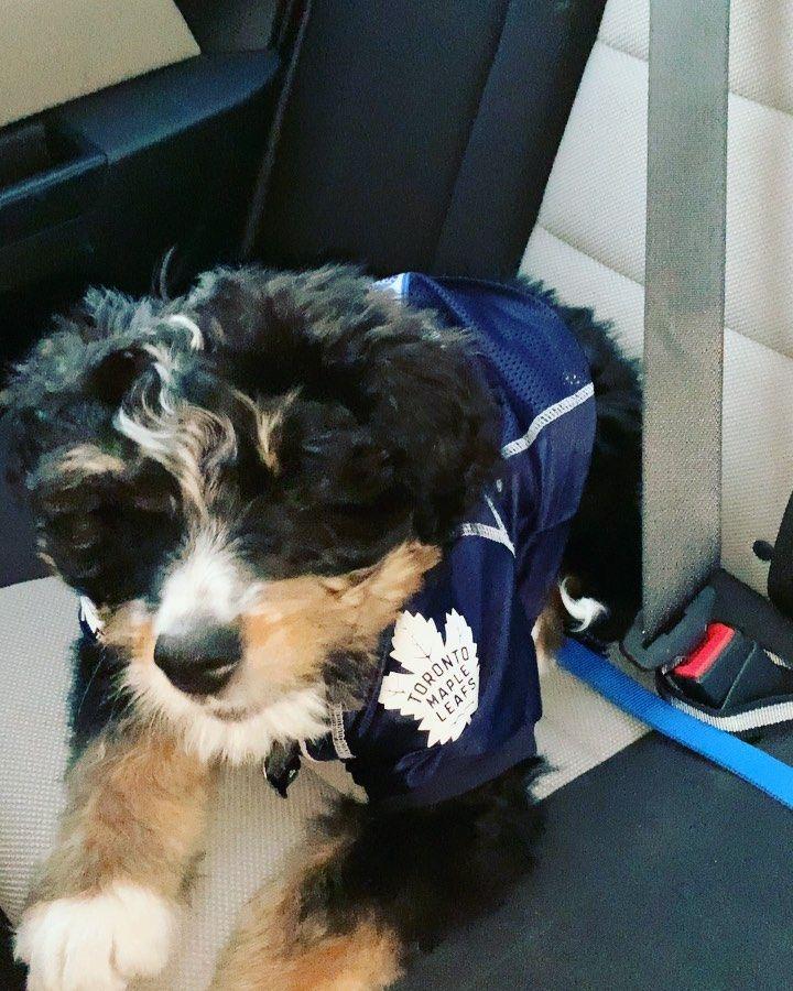 Get that paparazzi outta my snout!!#bernedoodle #bernesemountaindog #bernedoodlesofinstagram #doodlesofinstagram #pup #pups #puppies #puppy #dog #dogsofinstagram #dogs #doggo #rocky #rockybalbernedood #shopping #cute #cutepuppy #cutedogs #cuteanimals #poodle #poodlesofinstagram #berner #paparazzi #bark #barkbox #leafs #torontomapleleafs #toronto #mapleleafs #tml