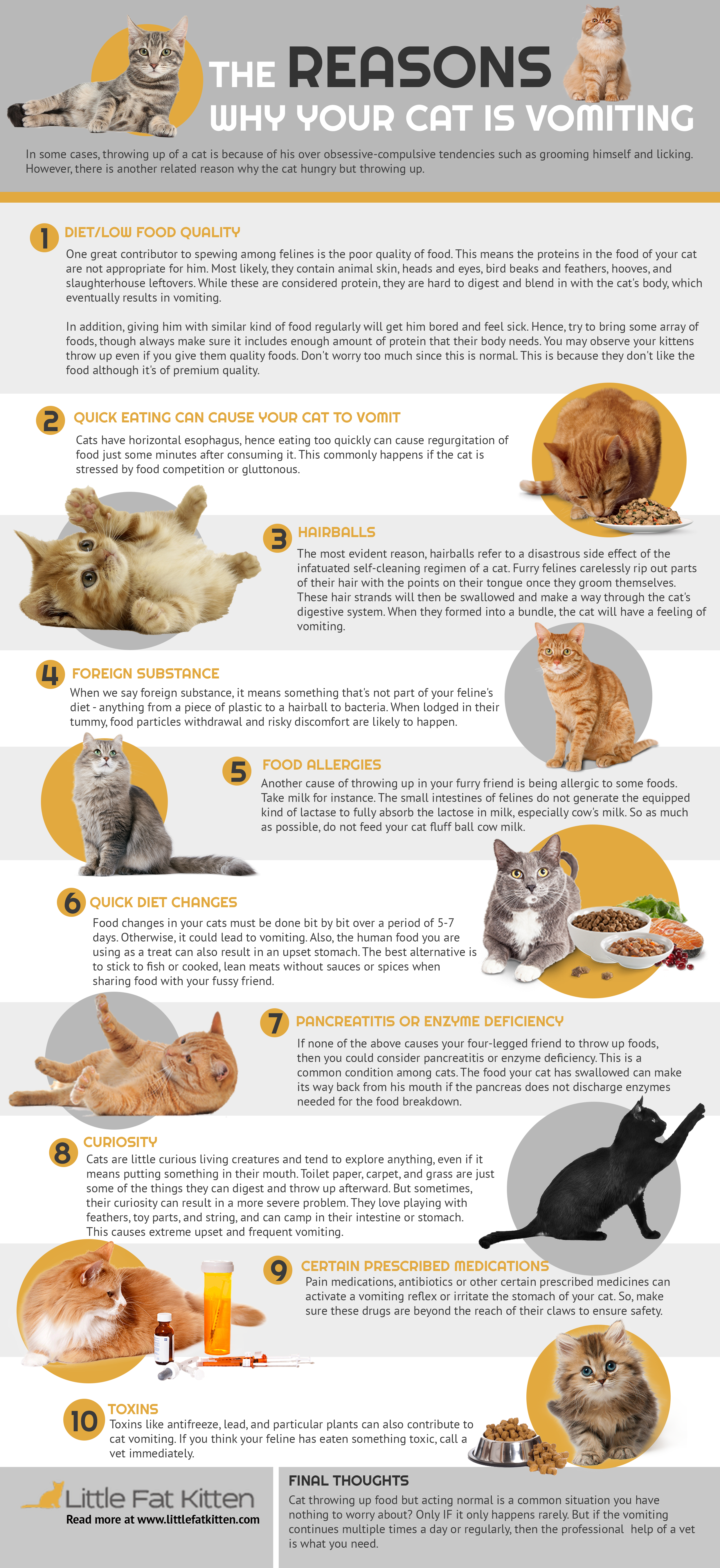 Reasons Why Your Cat Is Vomiting But Acting Normal Infographic In 2020 Cat Care Infographic Cats
