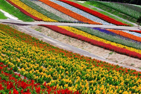 Friday Flowers Aerial Views Of Flower Farms Flower Farm Farm Photo Aerial View