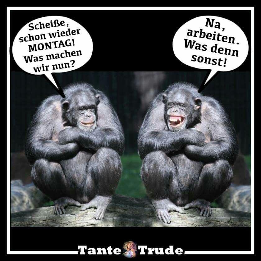 Pin von susanne doehmann auf guten morgen montag - Lustige bilder fa rs wochenende ...