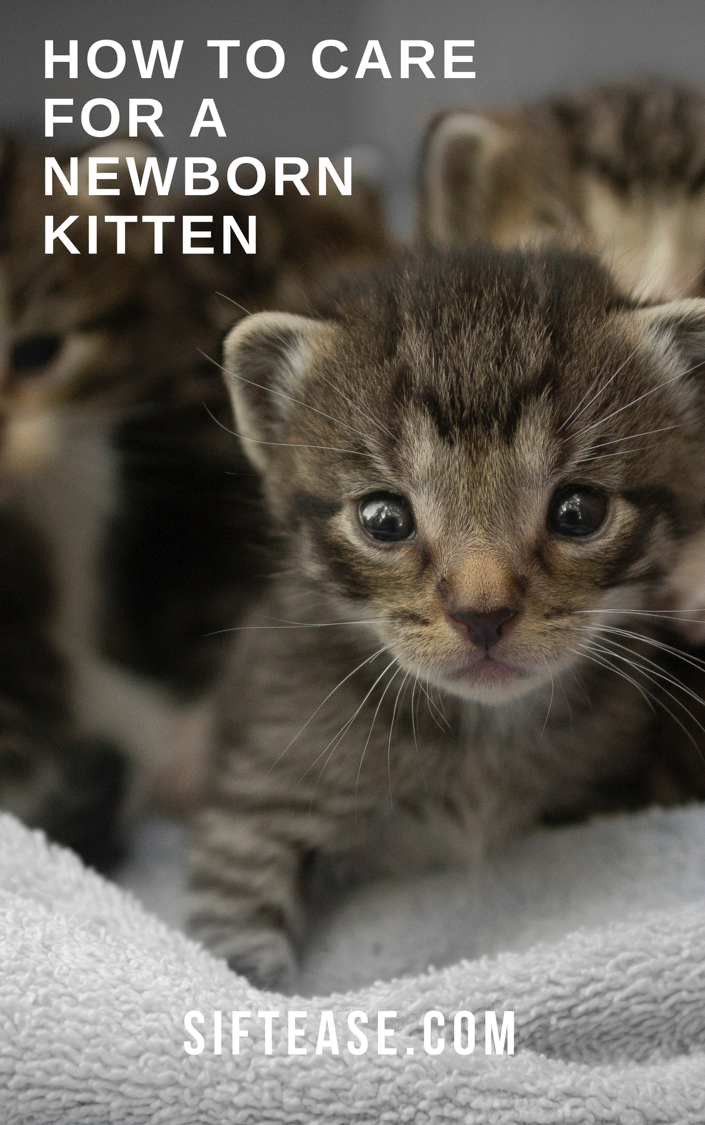 How To Care For A Newborn Kitten Clean Litter Club Newborn Kittens Kitten Season Newborn Care
